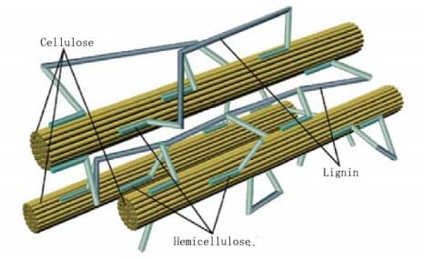 biomass particle structure